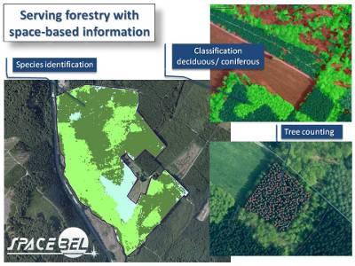 Oprogramowanie firmy może być zastosowane przy monitoringu lasów / Credits: Spacebel