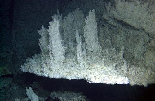 Zdjęcie przedstawia wapniowe kolumny z dna Oceanu Atlantyckiego z Zaginionego Miasta. Życie mogło powstać w podobnym, zasadowym środowisku. Nie tylko na Ziemi, ale także Europie i Enkeladosie. (Credits: University of Washington/Woods Hole Oceanographic Institution)