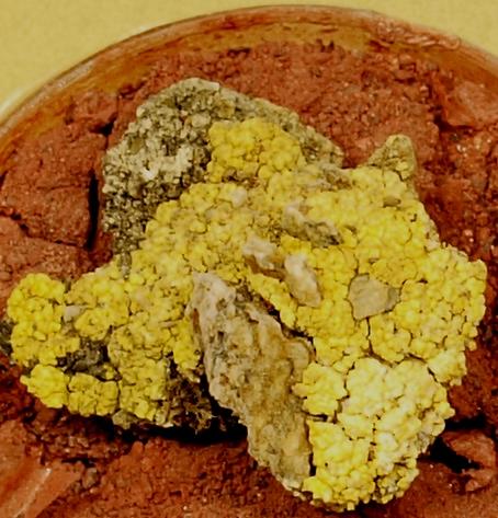 Porosty z gatunku P. chlorophanum na substracie symulującym marsjańską glebę. (Credits: German Aerospace Center's Institute of Planetary Research)