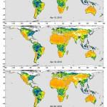 Część danych zebranych przez satelitę SMAP w kwietniu 2015. Żółte obszary wskazują na suchą wierzchnią warstwę gleby a niebieskie na wilgotną. Źródło: NASA/JPL-Caltech/GSFC