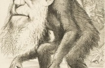 Ewolucja może być przewidywalna, a co za tym idzie, być może zdołamy zapobiec rozwojowi bakterii uodpornionych na większość antybiotyków. Źródło ilustracji: Wikipedia