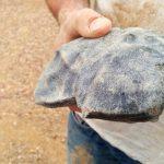 Odnaleziony meteoryt / Credits - Curtin University