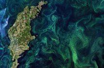 Sinice wokół Gotlandii - 20 lipca 2019 / Credits - Copernicus Sentinel data (2019), ESA
