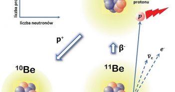 Emisja protonu opóźniona rozpadem ß– w 11Be. Stan podstawowy 11Be z halo neutronowym ulega rozpadowi beta do stanu wzbudzonego 10B, który znajduje się tuż powyżej progu rozpadu protonu. Stan ten następnie rozpada się do stanu 10Be poprzez emisję protonu. (Źródło: IFJ PAN)